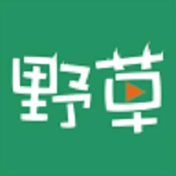 野草视频在线观看免费播放