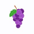 葡萄社区app下载安卓